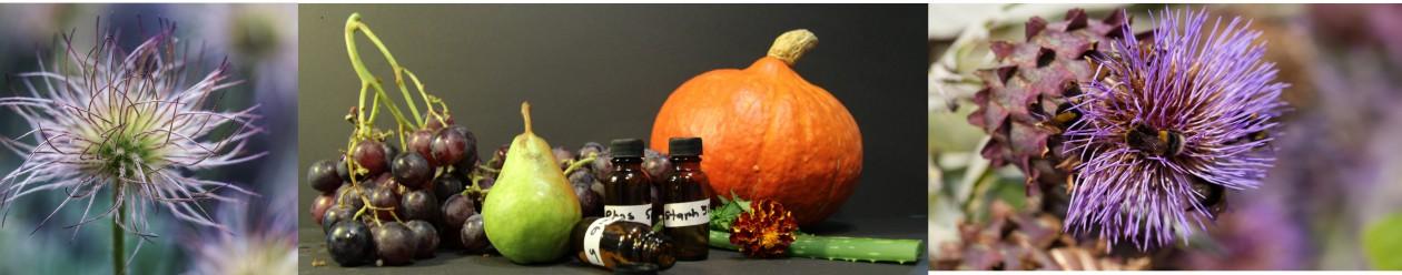 Homéopathie  Massages Nutrition Versoix Genève